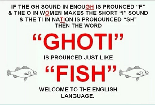 english language fish funny - 8111746048