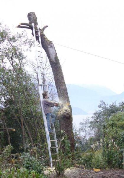 bad idea lumberjack dangerous - 8111785984