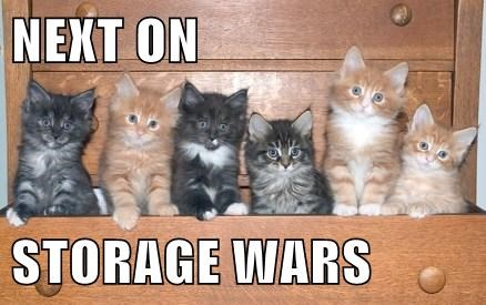 Cats cute kitten storage wars - 8111907328