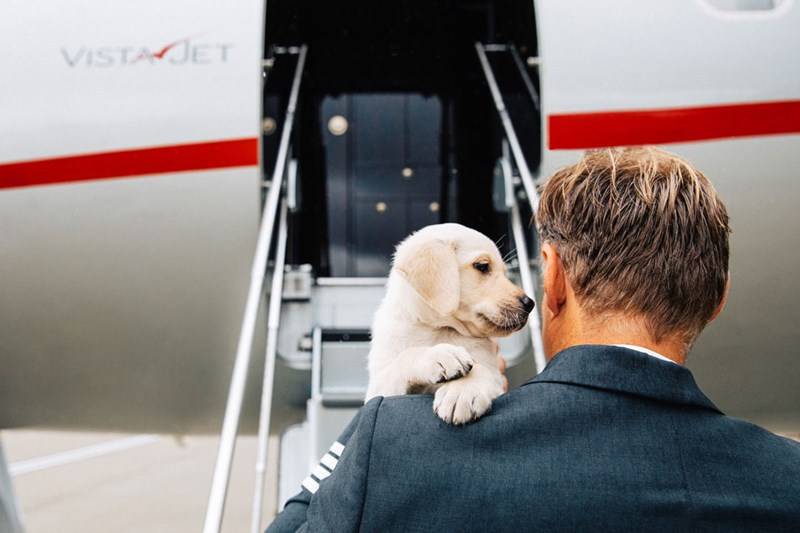 dogs pets Travel flying - 8112389