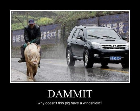 sweet ride pig cars funny animals - 8112795392
