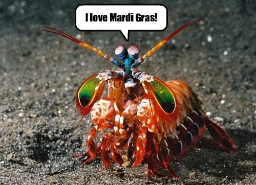 sealife,Mardi Gras,funny