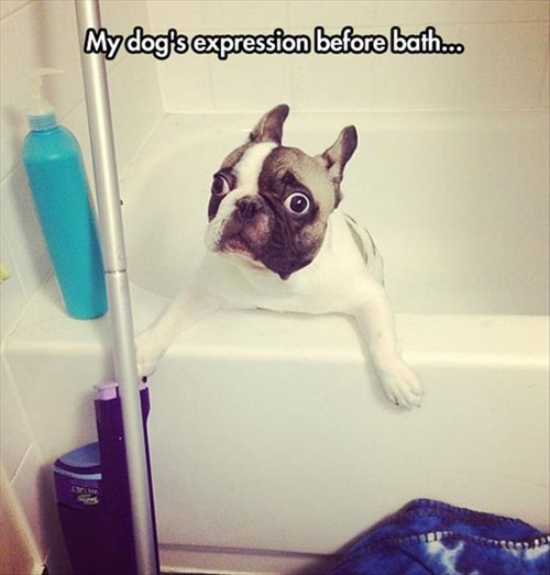 dogs,baths,scared,funny