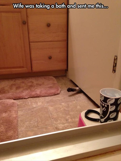 paws bathroom Cats funny - 8113307392