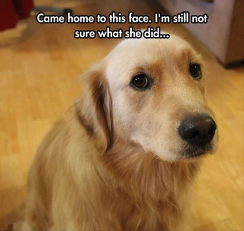 dogs,puppy dog eyes,funny,guilty