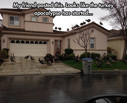 doomsday turkeys funny - 8113320704
