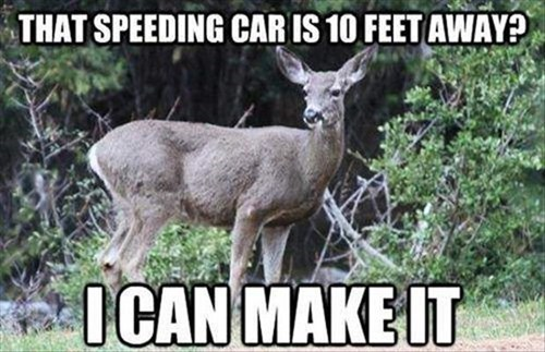 judgement,cars,deer