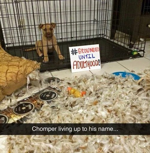 dogs puppies shame