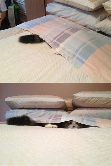 beds Cats sleeping funny - 8113442048