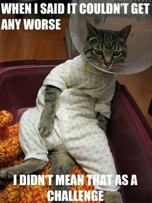 cone of shame,pajamas,grumpy,Cats