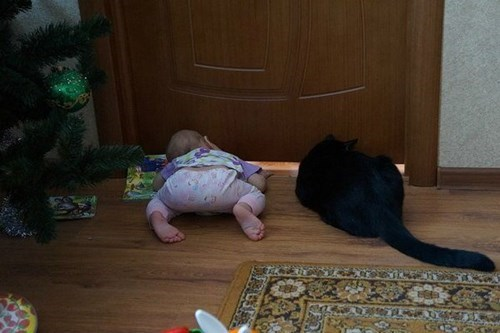 peeking,baby,parenting,Cats