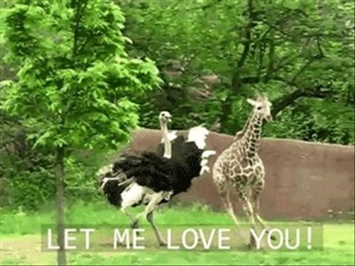 love funny ostrich giraffes - 8114675712