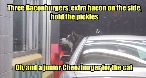 dogs,friends,order,noms,Cats,fast food,bacon