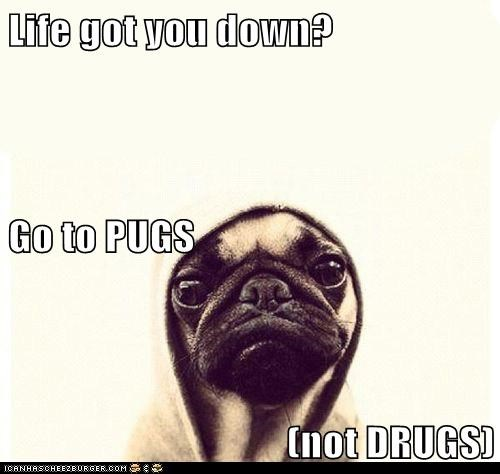 life,drugs,cute,pugs