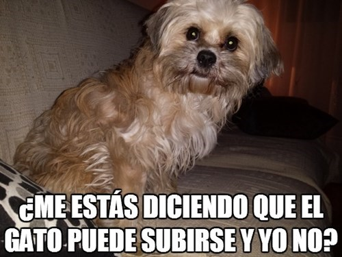 Memes animales perros - 8116153856