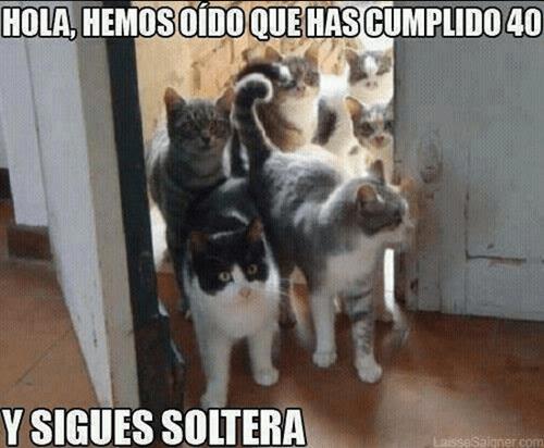 Memes animales gatos - 8116170496