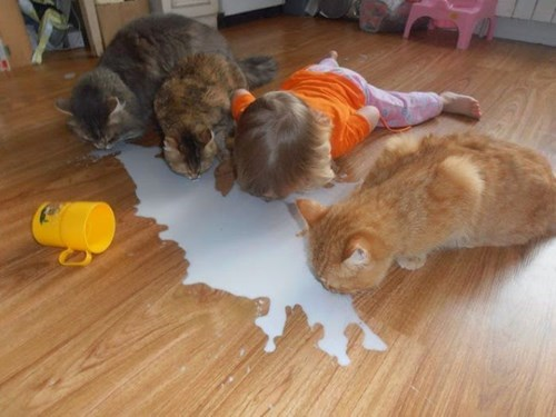 Cats,kids,sharing,parenting,spilled milk,g rated