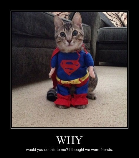 Cats halloween costumes funny payback superman