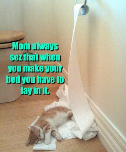 Cats funny kitten toilet paper - 8116281856