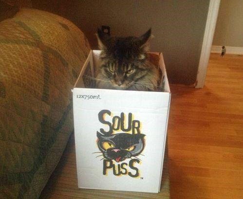 box Cats grumpy if i fits i sits - 8116326912
