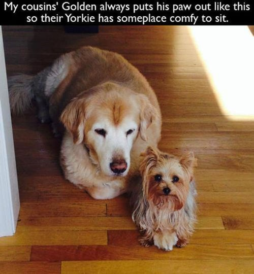 cute dogs comfortable friends - 8116329472