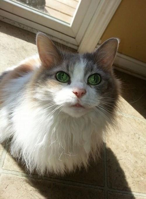 Cats envy eyes - 8116363520