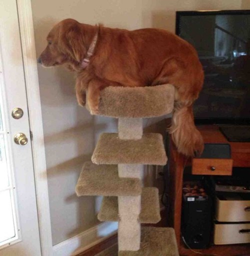 dogs cat tree revenge Cats funny - 8116374272