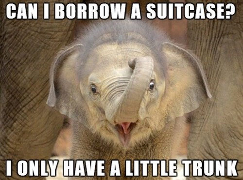 Babies,puns,cute,elephants,suitcase