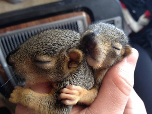 Babies nap snuggle cute squirrels - 8116391168