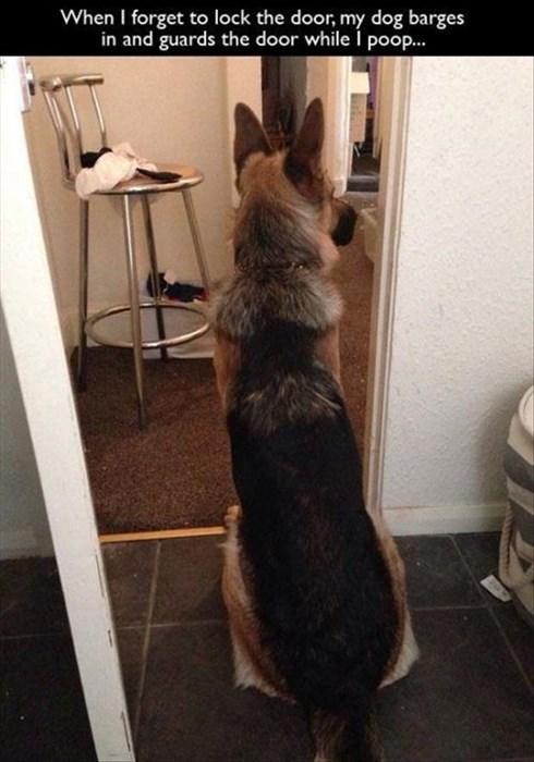 dogs,poop,guard