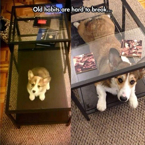cute habits growing up puppies