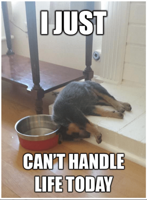 dogs funny life tired - 8116466688