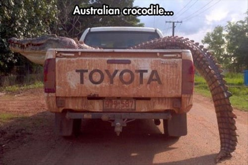 australia,crocodile,scary,truck