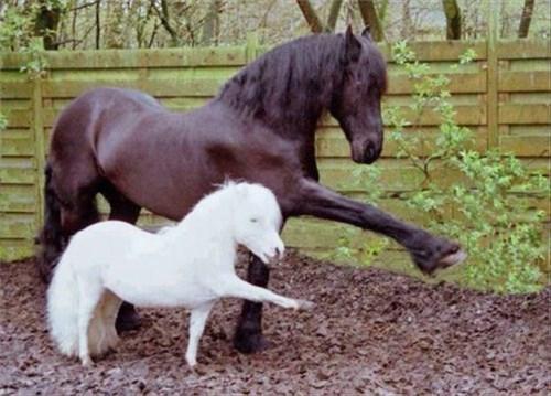 cute dancing horses - 8116478720