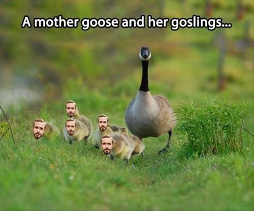 goose,puns,Ryan Gosling