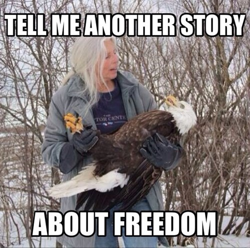 bald eagle funny freedom stories - 8116539904