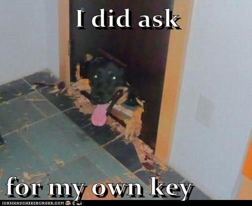 keys dogs destroy guilty - 8116726272