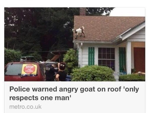 headline,Probably bad News,goats,fail nation,g rated