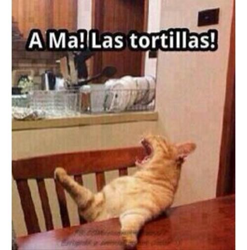 gatos bromas Memes animales - 8116978432