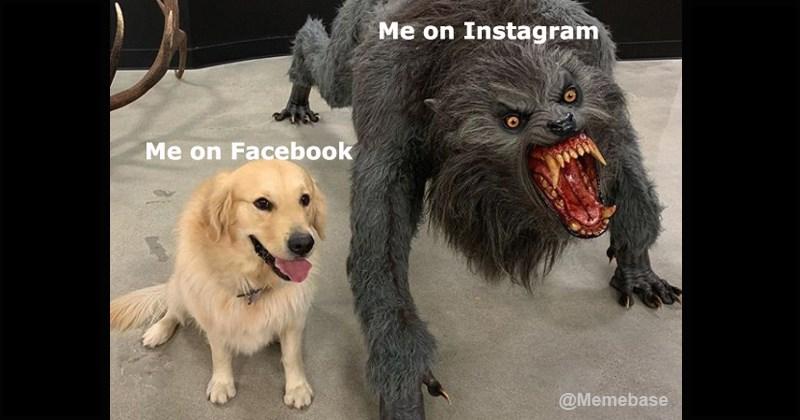 dog vs werewolf lies funny memes trending memes dank memes dogs cute golden retriever - 8116997
