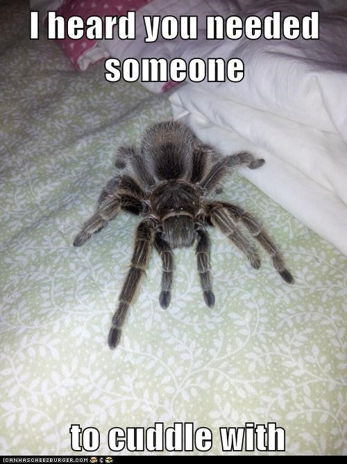 spiders,cuddle,creepy