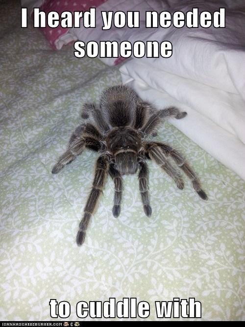 spiders cuddle creepy - 8118074880