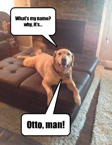 dogs puns ottoman funny - 8118723328