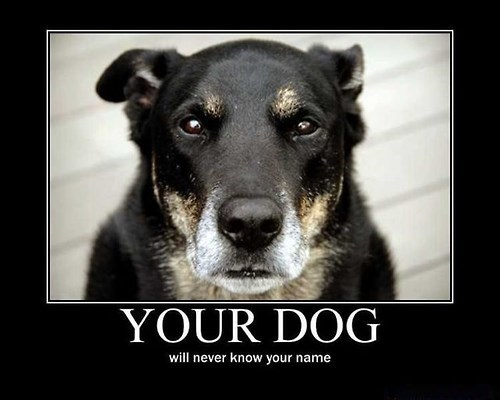 dogs depressing funny name - 8119271168