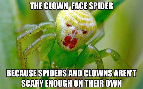 spiders clowns wtf nope