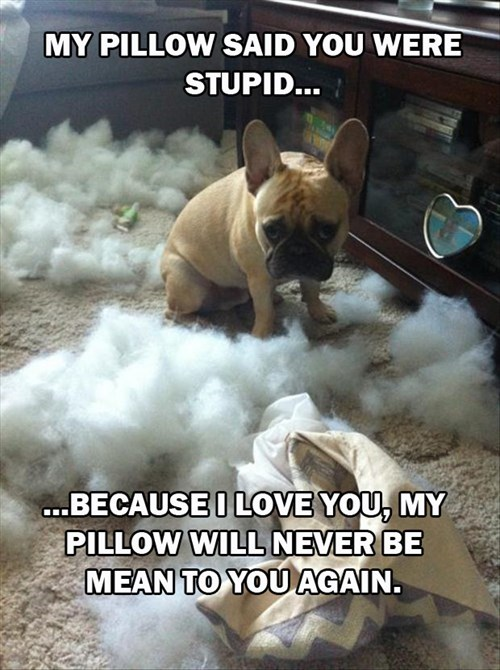 dogs,pillows,destroy,funny,guilty