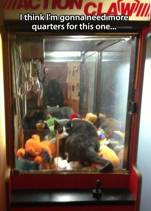 claw machine prize Cats - 8119653376
