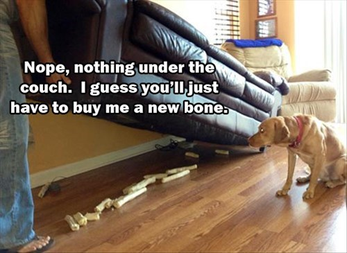 dogs,bones,stash,funny