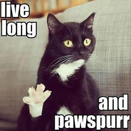 puns Star Trek Cats - 8119680512