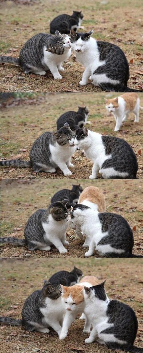 kissing break it up Cats - 8120575488